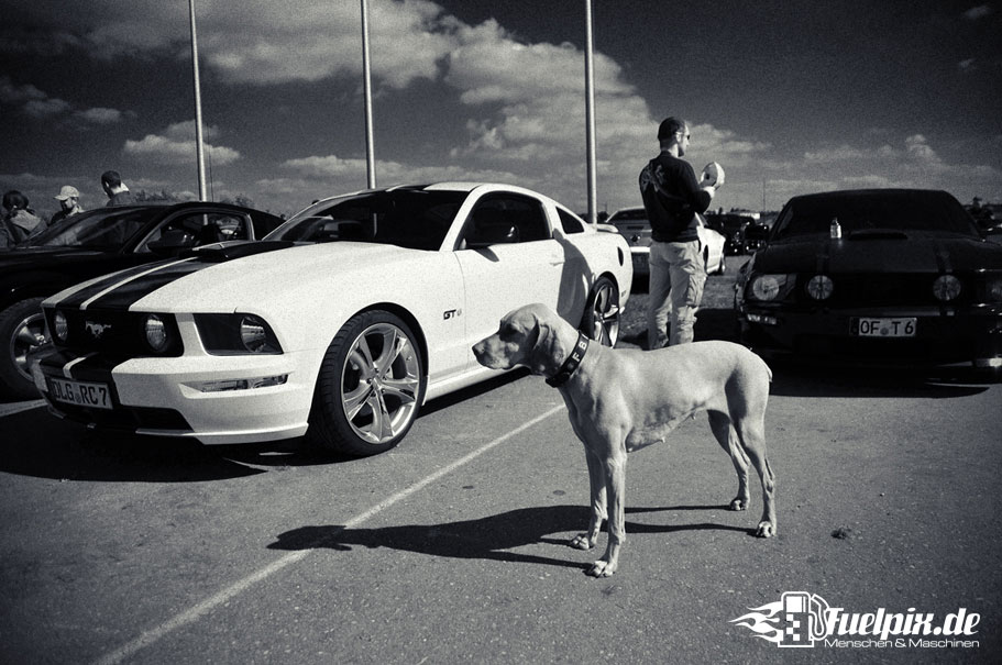 Shelby_GT500_Treffen_19
